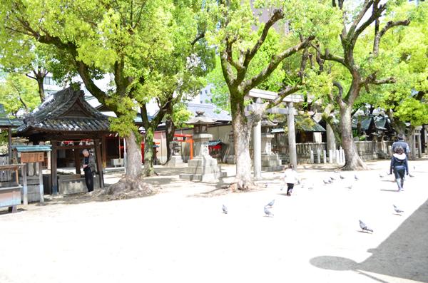 大阪天満宮鳩